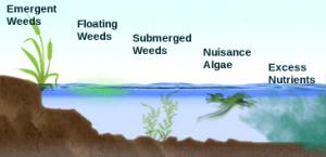Weed_diagram
